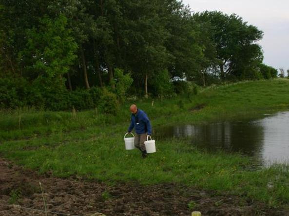 Marco, 43enne di Latina, ha passato l'estate in Danimarca ad occuparsi del ripopolamento di rospi