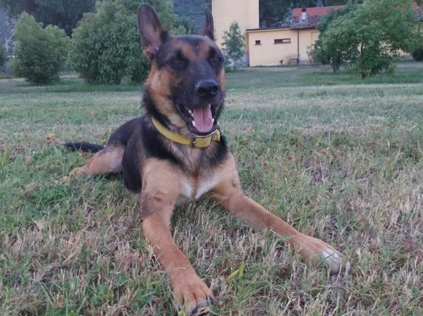Ziggy, il cane morto di eroina in un parco a Roma