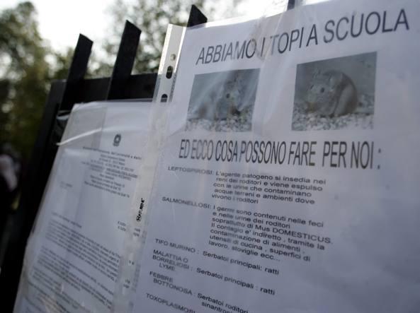 Foto d'archivio sull'annoso problema dei topi a scuola (Fotogramma)
