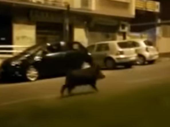 Roma, si scontra in scooter con un cinghiale: muore 49enne