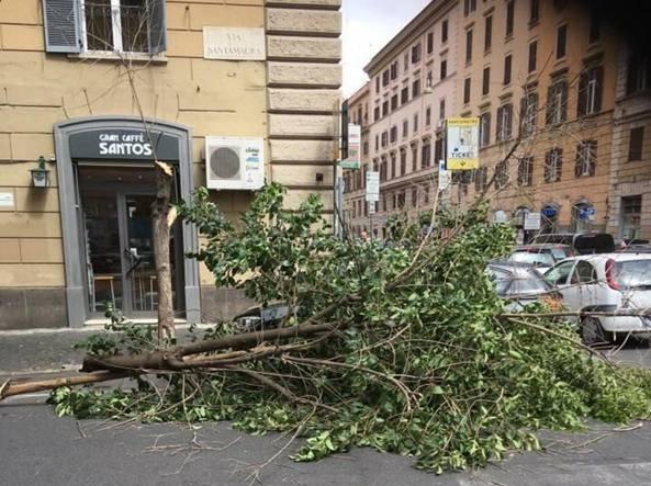 L'albero caduto in via Santamaura venerdì mattina
