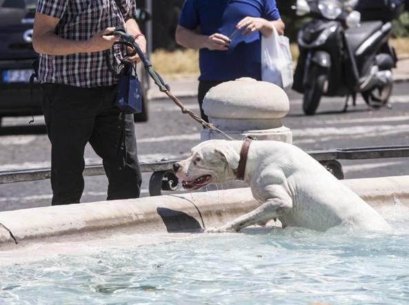 Un cane a bagno al Fontanone del Gianicolo (LaPresse)