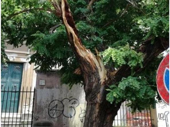 L'albero in via Taranto