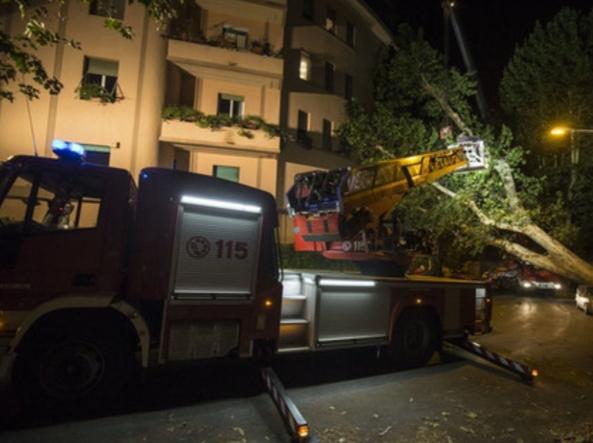L'albero caduto a Trastevere (Proto)