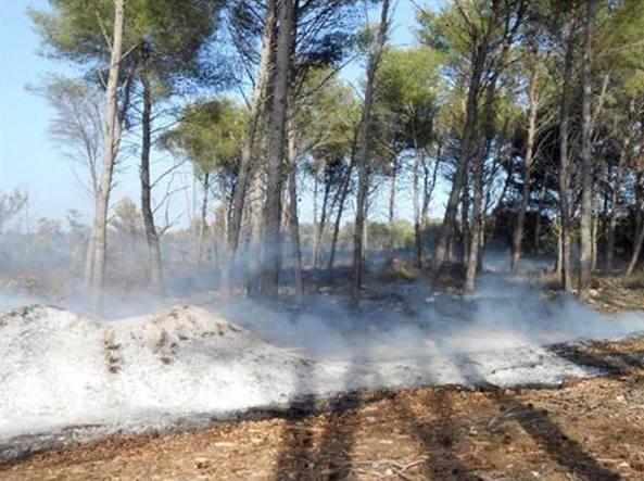Incendiano la pineta di Montalto di Castro