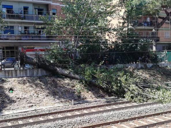 Roma-Lido, albero sui binari: attivi bus sostituivi ad Ostia