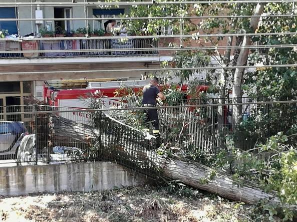 Roma-Lido, albero cade a Magliana. Treni in ritardo