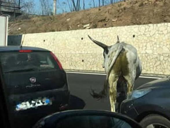 Autostrada A1, code per incidente a Barberino