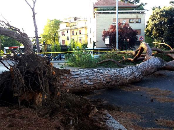 L'ultimo albero caduto martedì sera a Prati (foto Proto)