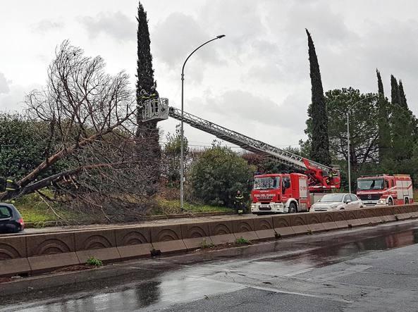 Violenta grandinata a Roma, caduti alberi e rami