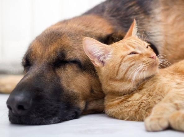 Fusa sotto il piumone il 53 di cani e gatti dorme nel letto dei proprietari - Lo trovi sotto il letto ...